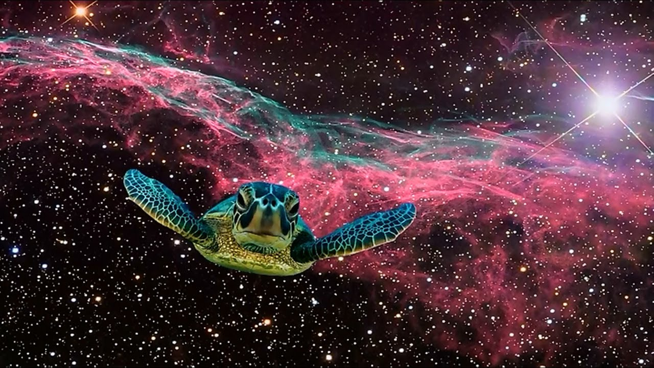 Turtle dream sequence always sunny in philadelphia youtube for What is outer space made of