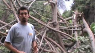Árboles - Vivero Chaclacayo