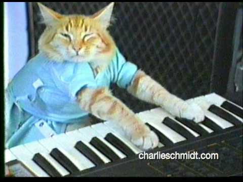 Keyboard Cat Behind The Scenes! - SHOCKING NEW FOOTAGE!