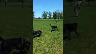Macungie dog park 5-stars