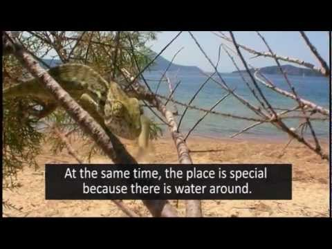 documentary Golfland? - english subtitles & speakage
