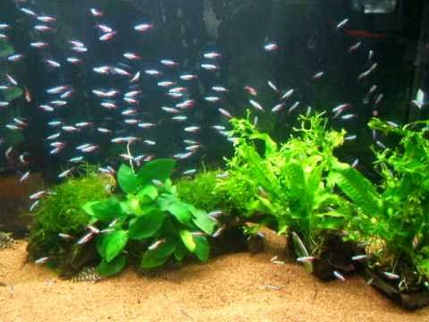 Reflecteur neon aquarium