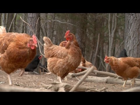 Sustainable Agriculture at Fickle Creek Farm