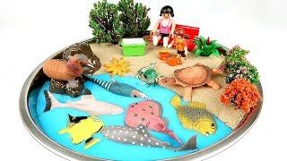 Learn Sea Animal Names For Kids. DIY Beach  Shark, Turtle, Fish, Crocodile, Ray - ColorMonsters