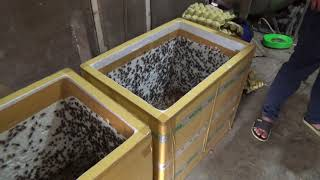 Cách dán băng dính thùng xốp nuôi dế mèn