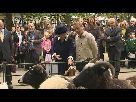 Camilla warns goat as she protects her handbag