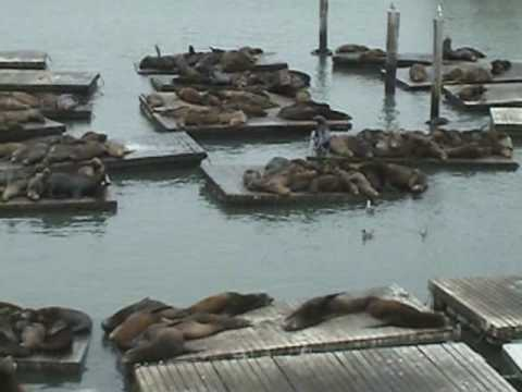 Troop 14 at Pier 39 - Sea Lions