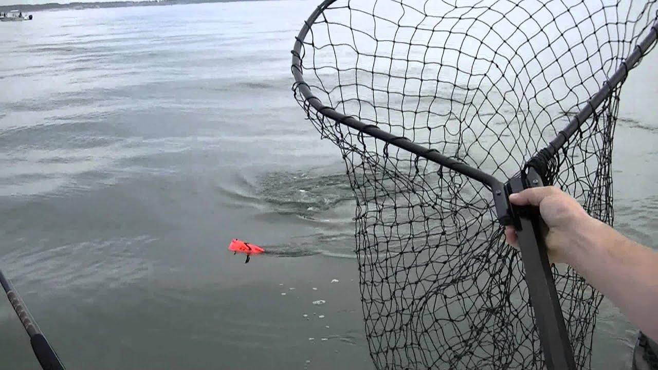 Chesapeake bay striped bass fishing 12 20 2011 youtube for Chesapeake bay striper fishing