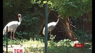 Верблюди, поні, дикобрази та хижі птахи поїдуть з Одеського до Тбіліського зоопарку - (видео)