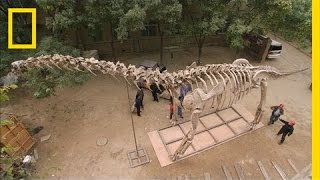 En busca del Dinosaurio más grande del mundo