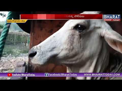 గోవులు అక్రమ రవాణా చేస్తున్న ముఠా అరెస్ట్ | 28 Cows | Kothagudem Dist | Bharat Today