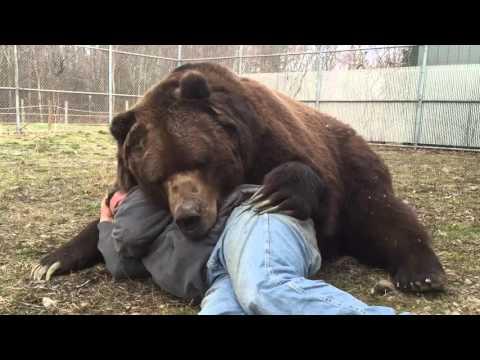 Se acostó con un oso de 700 kilos pero algo no salió bien