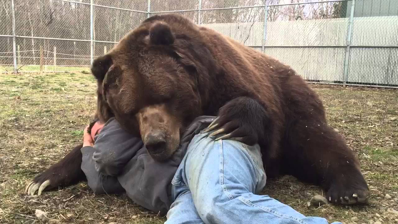 As Gentle As A Rescued Bear Can Get