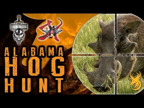Knife Hunting Hogs in Alabama