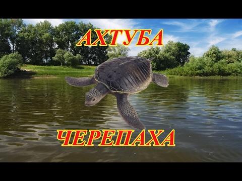где лучше ловить черепаху