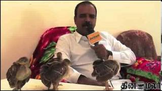 Madurai Advocates Submits Peacock Eggs to Govt - Dinamalar Nov 29th 2013 Tamil Video News