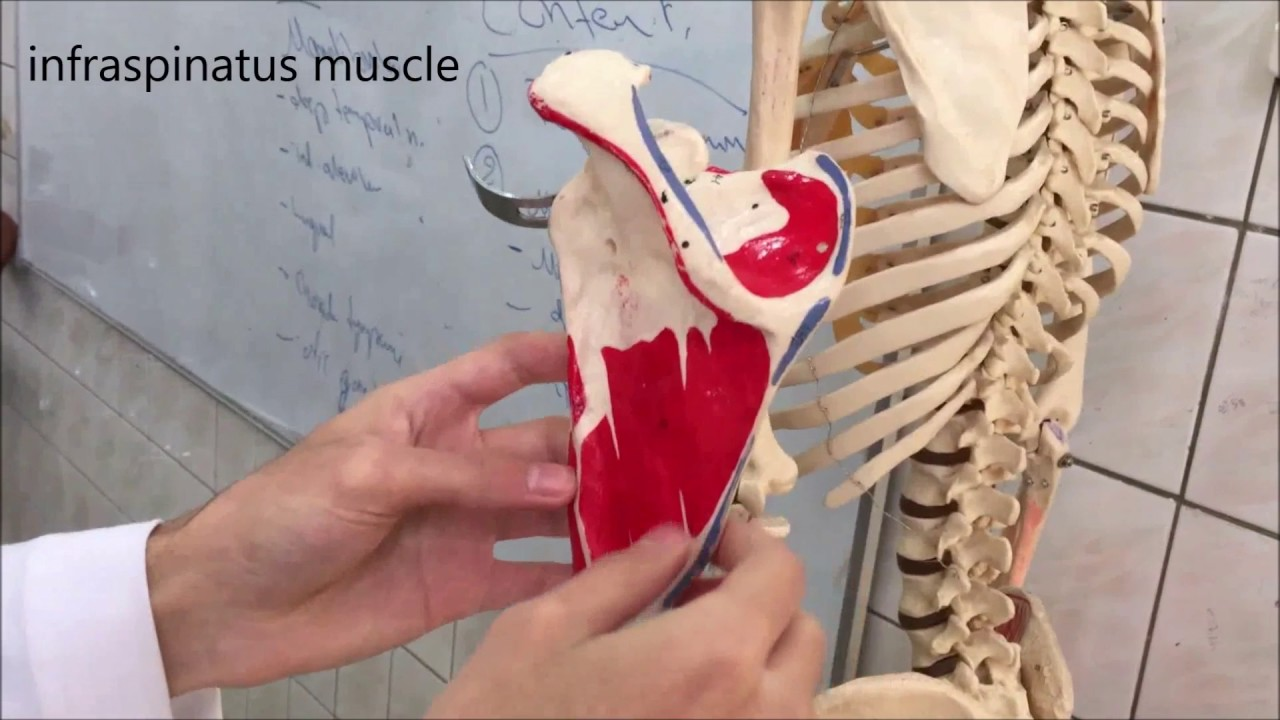 Wisconsin anatomy videos 3831923 - follow4more.info