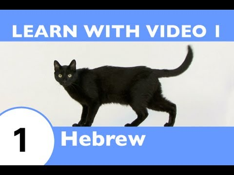 Learn Hebrew With Video - Learning Hebrew Vocabulary for Common Animals Is a Walk in the Park!