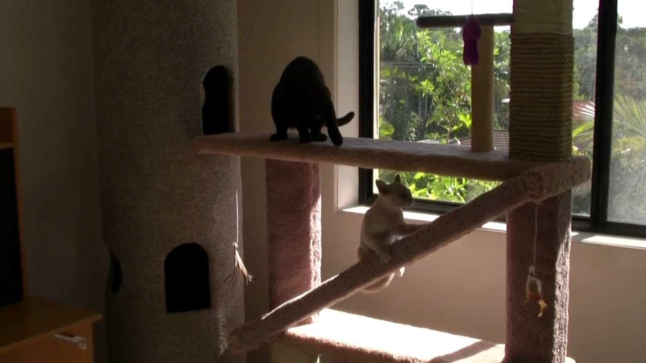 Make A Cat Play Tower