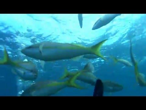 Adventures with the Mini Yellow Submarine in Nassau, Bahamas