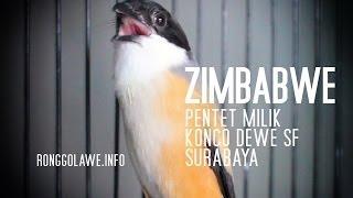 Pentet ZIMBABWE Gacor Calon Juara Piala Presiden