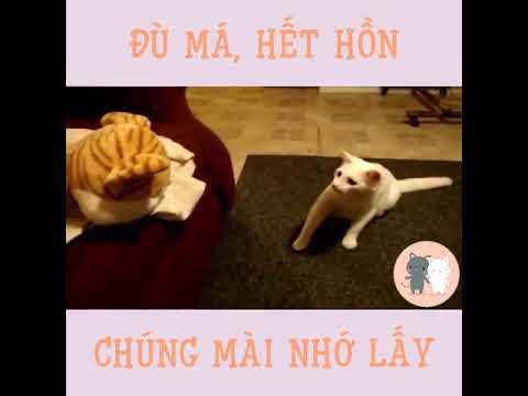 Phản Ứng Cực Nhây Của Các Chú Mèo Cười Không Nhặt Được Mồm