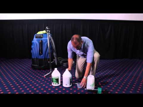 Proceso Profesional de Limpieza de Alfombras