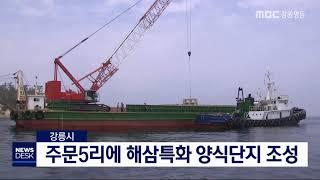 투/강릉]주문5리에 해삼특화 양식단지 조성