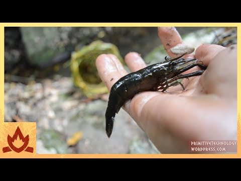 Primitive Technology: Freshwater Prawn Trap