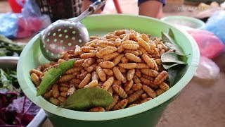 Ghé Thăm Chợ Của Người Thái Tây Bắc (chợ côn trùng) | Hoa Ban Tây Bắc