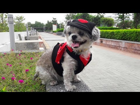 Funny Dogs Wearing Costumes Compilation 2013 [HD]