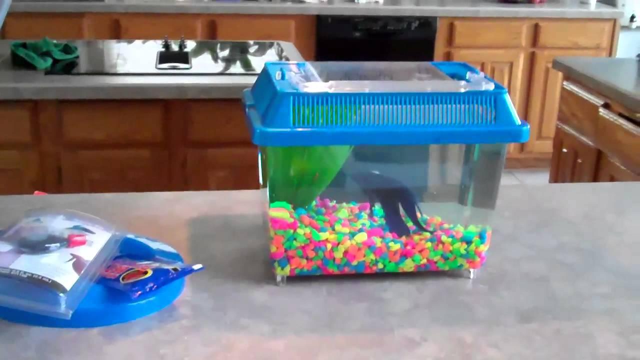 How to treat a sick betta fish youtube for Betta fish treats