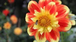 reportage CNN miracle La fleur qui s'ouvre a l'appel a la prière Adhan أزهار تتفتح حينما تسمع الأذان