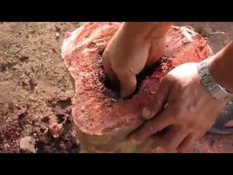 Pemindahan Kelulut Ke Kotak Kloni &amp  Batang Kayu