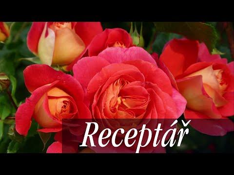 Sázení růží