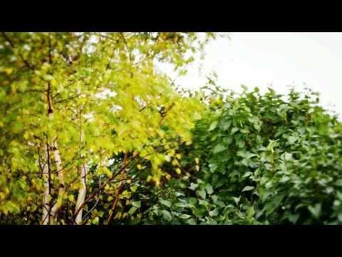 Bahroma - На семи холмах