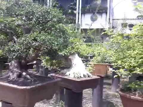 Bonsai Garden from Thailand