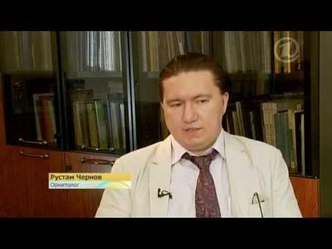 Первый канал- Криптохром
