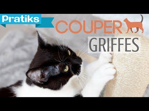 Conseils v to comment couper les griffes de son chat - Comment couper les griffes de son chat ...