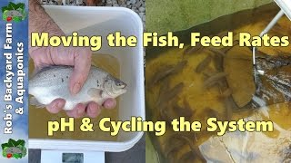 Backyard Farm Aquaculture  (RAS) Vlog.. Moving the fish, feed rates, pH & cycling the system..