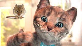 Fun Pet Care Kids Game - Little Kitten Preschool Learn Animals Game.