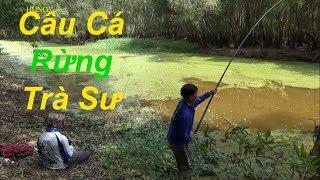 Fishing, săn loài cá hun dữ trong rừng Trà Xư (cá lóc đen) - by pou phung fishing