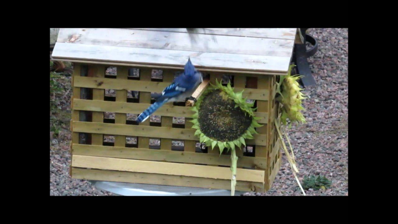Diy Bird Feeder House For Small Birds Only Youtube