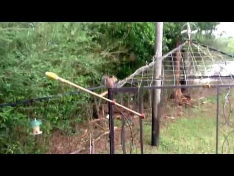 Twirl-a-squirrel