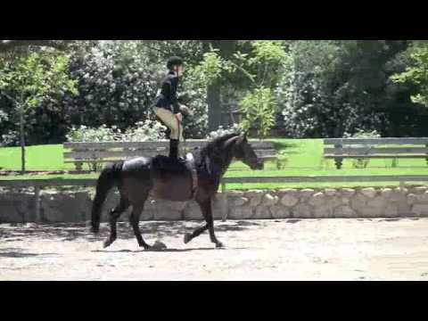 rider jumping a horse while standing up with no tack