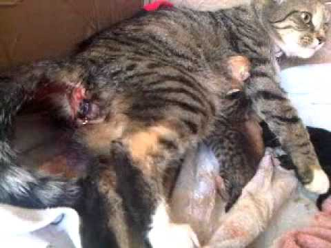 Cat Birth Videos Youtube