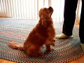 40 Amazing Dog Tricks