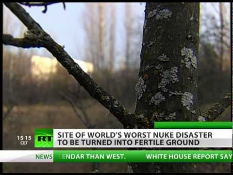 F.A.R.M.E.R.: Chernobyl disaster zone to bear fruit after fallout