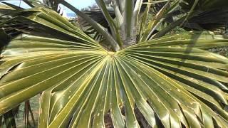Arboles de hoja perenne 2 cuidar de tus plantas es for Arboles crecimiento rapido hoja perenne