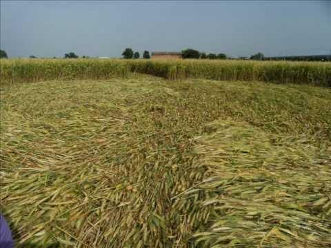 Crop Circle cerchi grano a S.Andrea Faenza (RA) Italy 11 giugno 2010